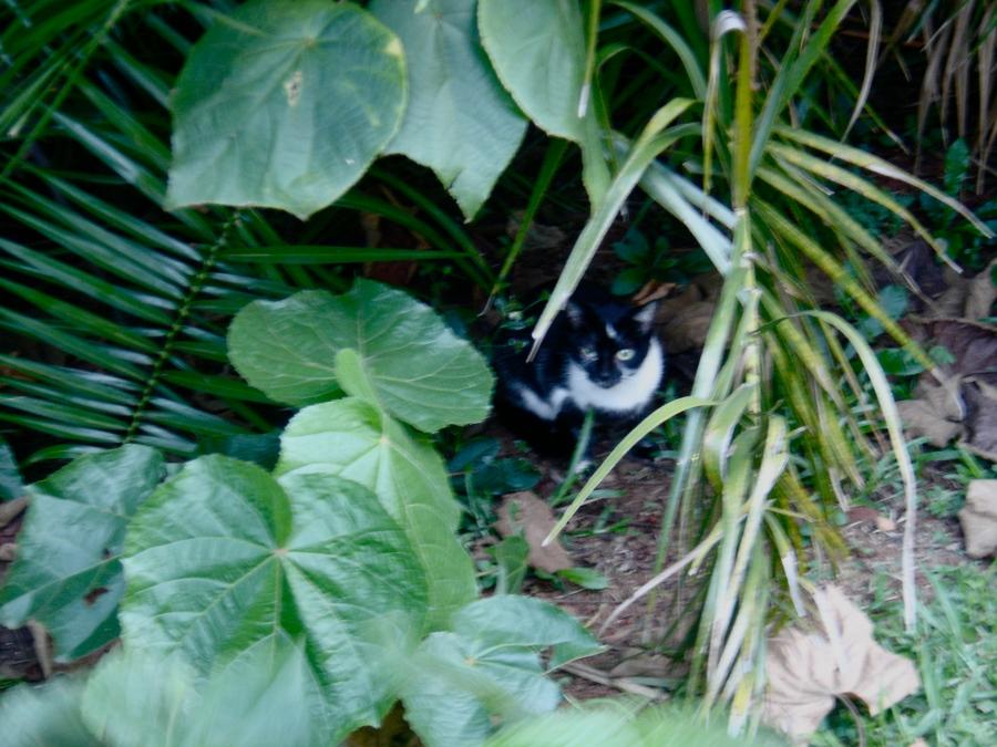 Sou um gato feral, moro nesse arbusto.