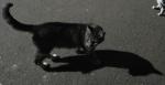 Nosso gato guarda costa voluntário não é o máximo?
