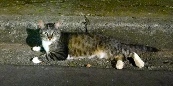 As voluntárias o chamam de Zé, mas eu só consigo chamar esse gatão de Ricardo.