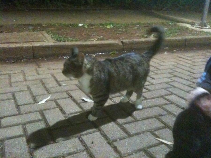 Ricardo a postos para continuar a caminhada.
