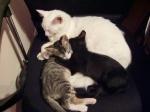 A gente adora fazer um balaio de gatos aqui na casa da tia com nossos irmão portiços