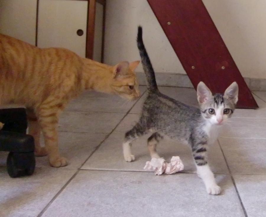 Essa é a Ginger, amiga aqui no lar temporáreo
