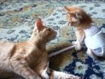 Lion e Ginger , sua amigona no LT