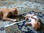 Lion e Ginger, grandes amigos na diversão