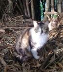 No solitário bambuzal