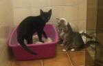 Família inteira abandonada, com uma bebêzinha tripézinha. Todos adotados e felizes