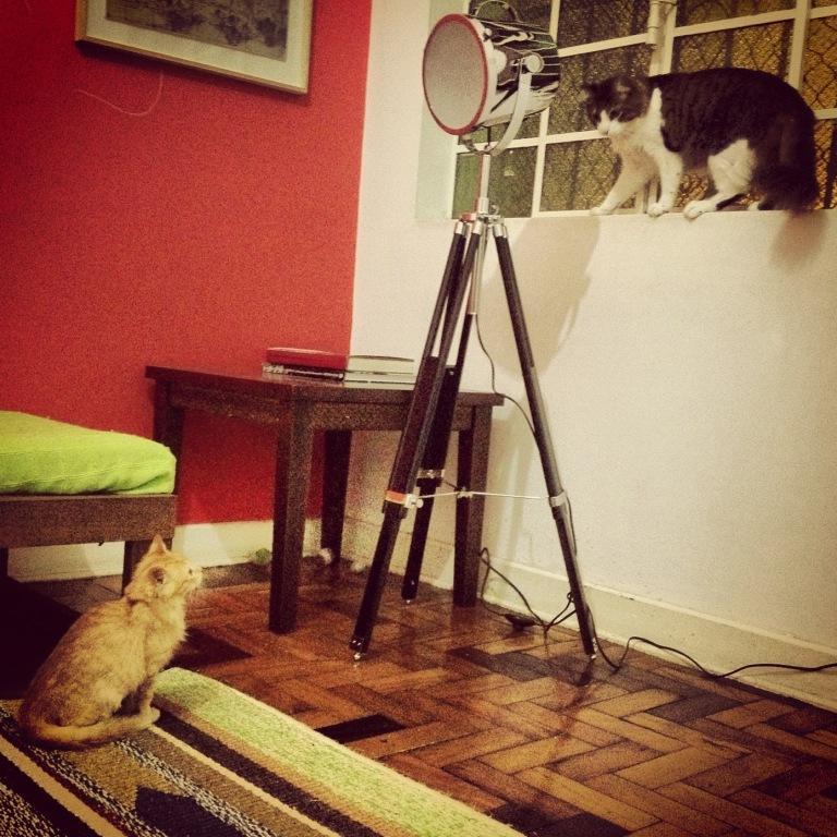 brincadeira de gato com o Haroldo