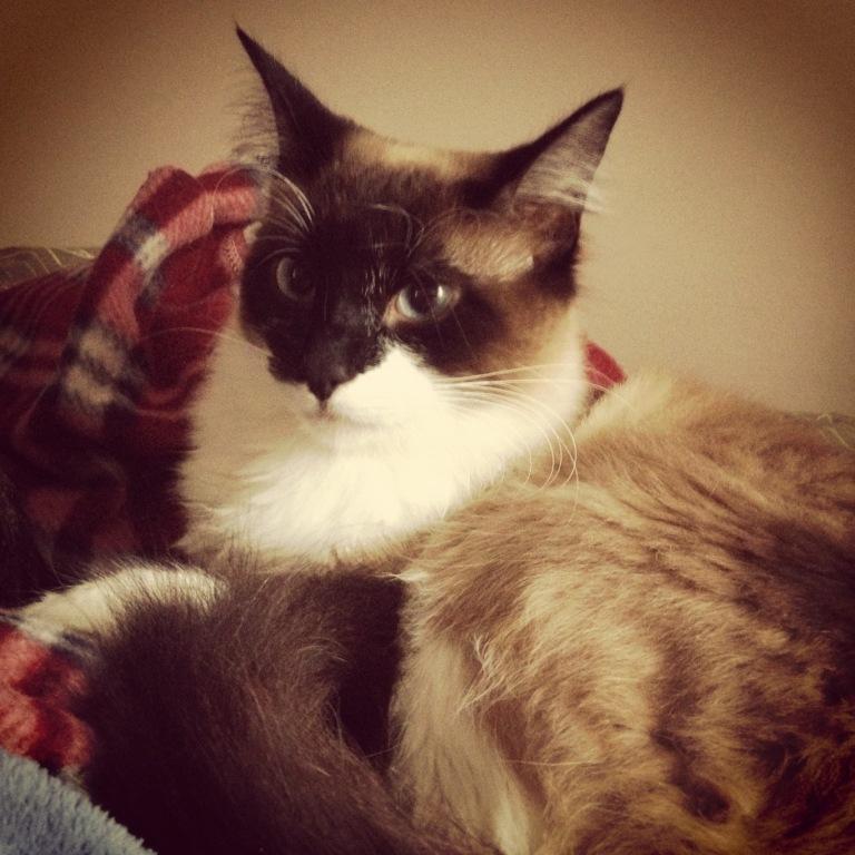 meu irmão Calvin, um gatão!