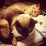 adoro dormir com meu irmão Fidel