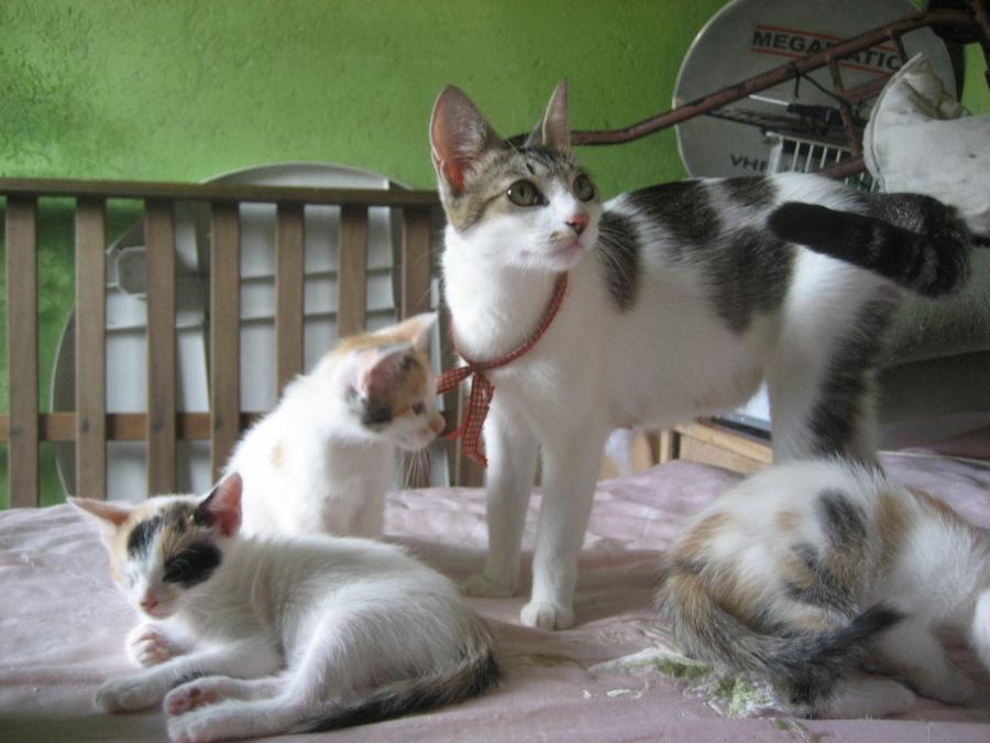 Vicky, abandonada grávida. Aqui com seus bebês lindos, todos adotados inclusive a mãe