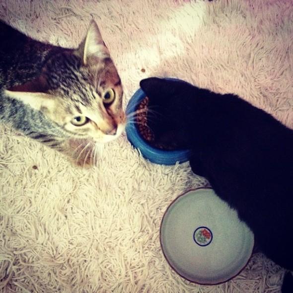 Tinico e sua amiguinha Rajada