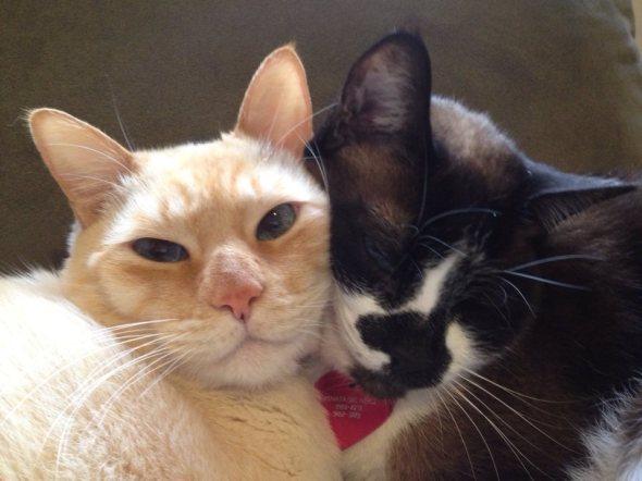 Muito Amor: gatinhos da voluntária Renata Del Nero