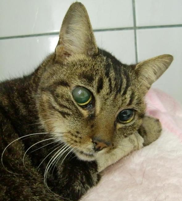 Rajinha é um das gatas mais idosas e doces do nosso projeto.