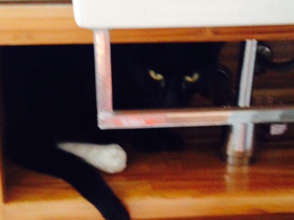 Pantera é outro gato que teve problemas de saúde