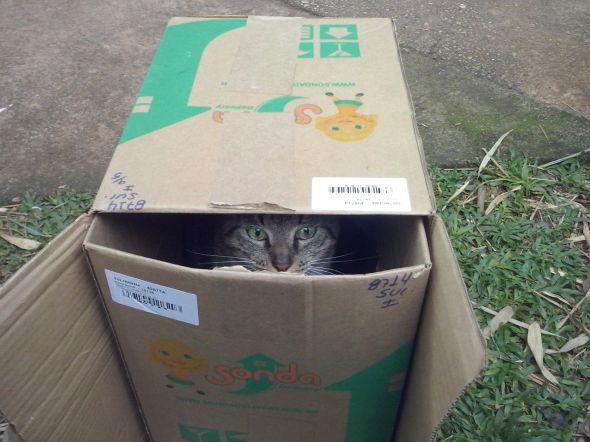 Figura! O gato Zé Ricardo vive no parque, mas também adora as cabanas que os voluntários fazem.